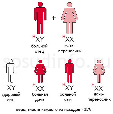 гемофилия: Отец больной гемофилией, мать - переносчик гена