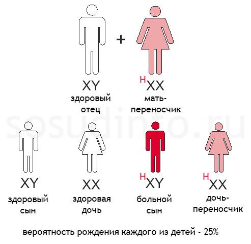 гемофилия: Здоровый отец, мать - переносчик гена