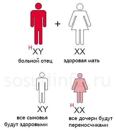 Гемофилия: Отец больной гемофилией, здоровая мать