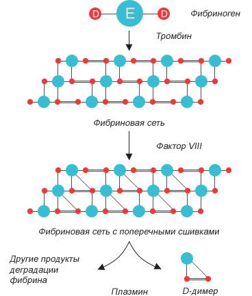 Фибриноген и д димер при беременности