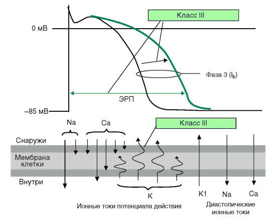 действие антиаритмиков 2 и 3 классов