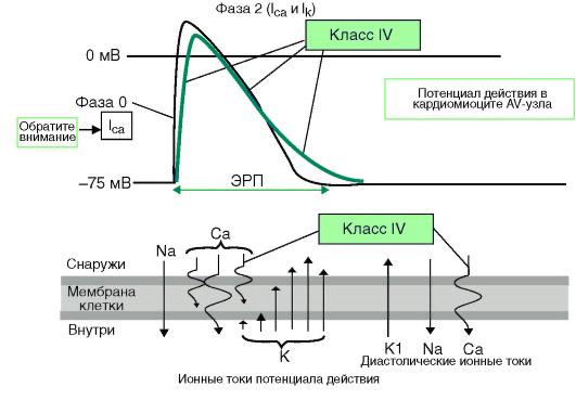 действие антиаритмиков 4 класса