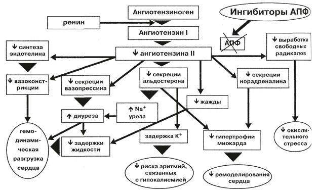 механизм действия АПФ при ХСН