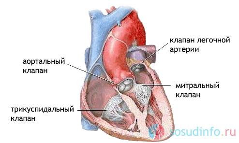Недостаточность трикуспидального клапана (ТК): развитие, проявления, лечение, прогноз