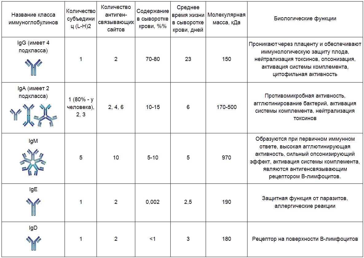 Таблица: виды антител